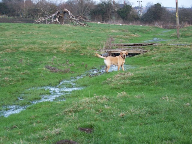 Water Meadows, Bishopstone