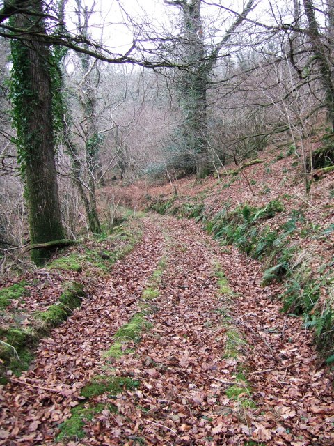 Track in Blinsham Wood