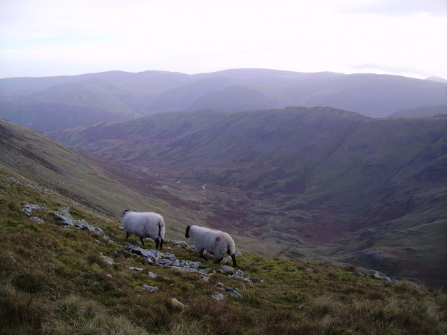 Sheep above Deepdale
