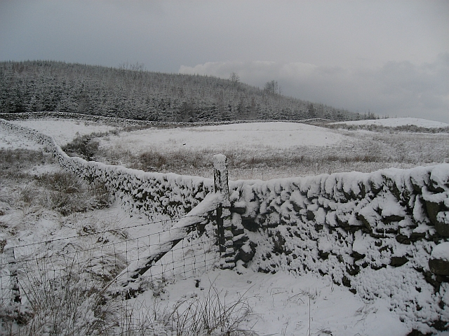 Fields and Forest after a snowfall