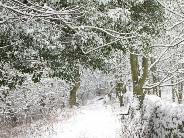 Footpath alongside the River East Allen