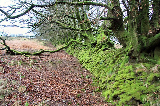 Mossy wall and trees