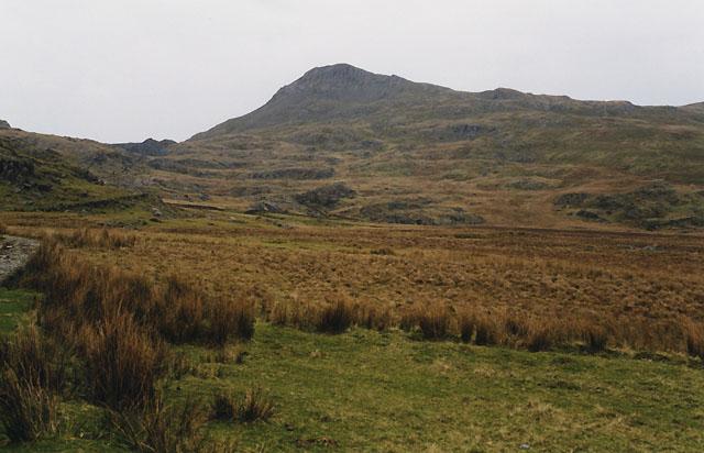 Rough grazing east of Rhyd Ddu