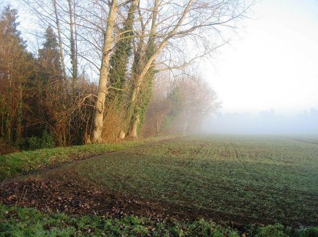 Misty Farmland
