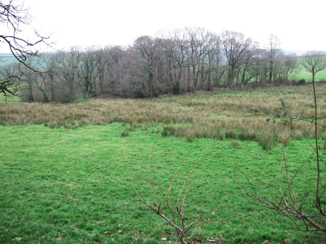 Wood near North Healand