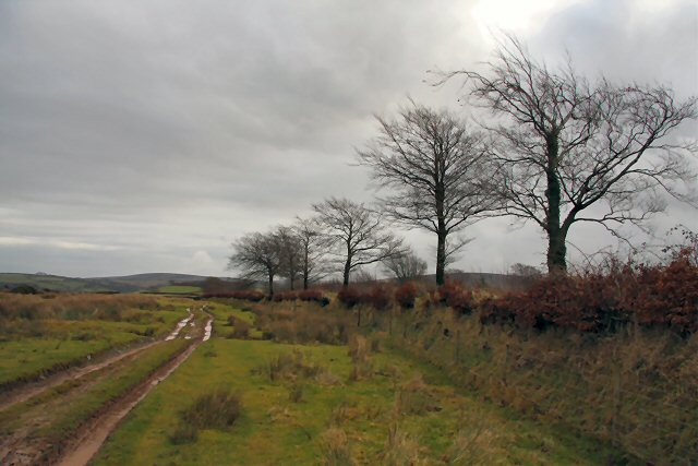 Bridleway to Withypool