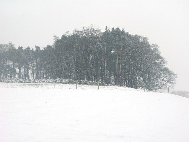 Plantation above Allendale