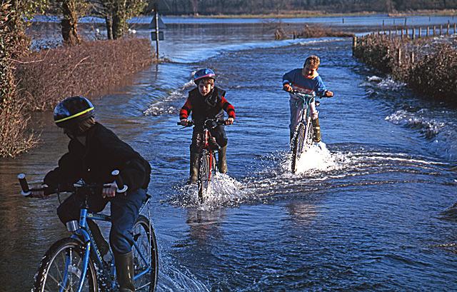 C'mon you two! Winter Flooding at Harbridge