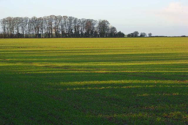 Farmland on the downs, Ashbury
