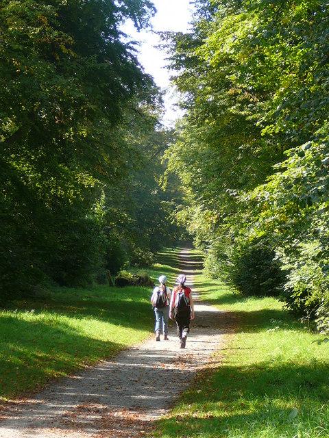 Woodland walk above Tring Park