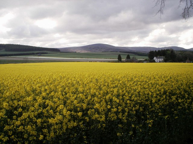 Farmland and Mountains near Gannochy, Edzell