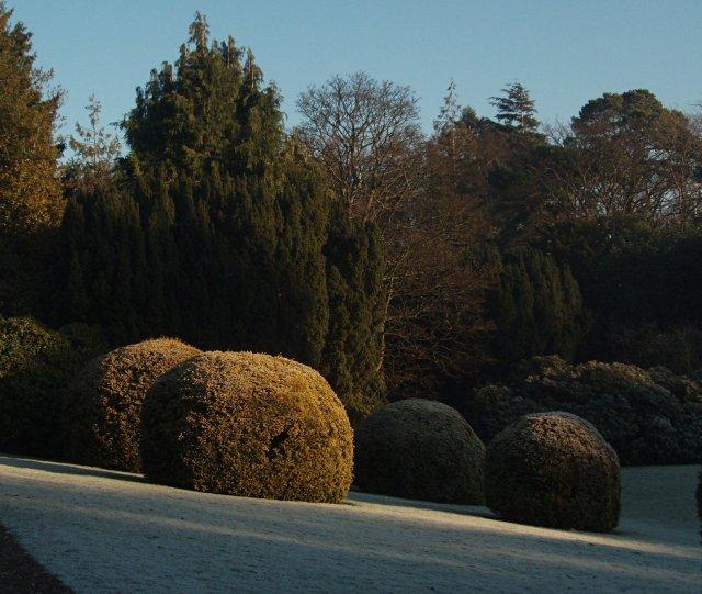 Yew bushes, sunken lawn, Heriot-Watt University