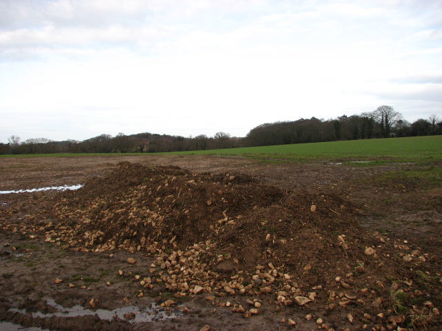 Sugar beet was harvested here