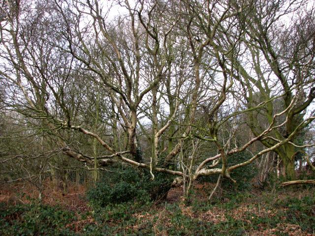 Woodland at the edge of Edingthorpe Heath
