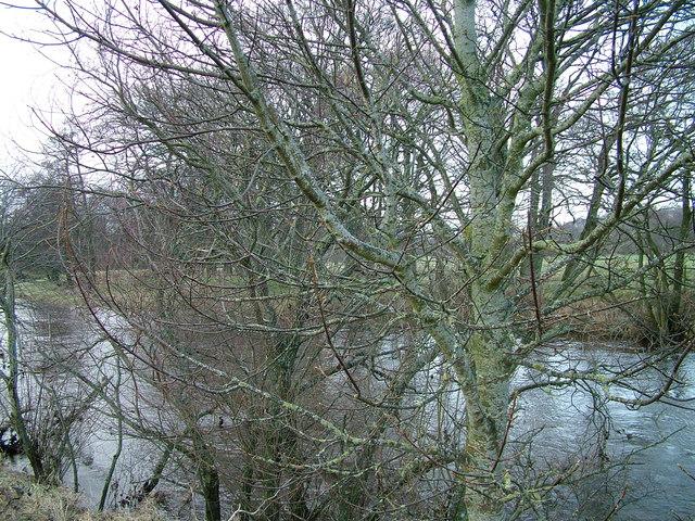 River Eden through the trees