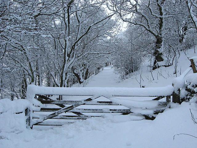Gateway to Langlee Community Woodland
