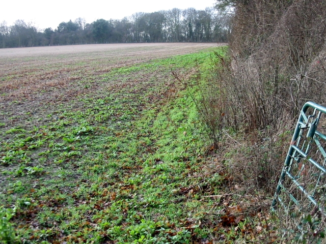 Field margin adjacent to the footpath to Kelk Hill