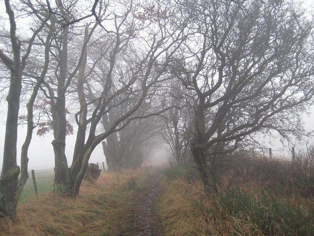Misty beeches