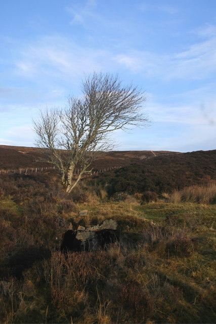 Tree by Loch Laro