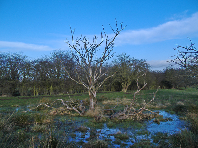 Figham Common, near Beverley