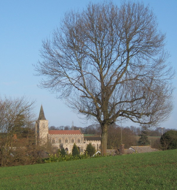 Field and tree south of Rattlesden, and a glimpse of the church