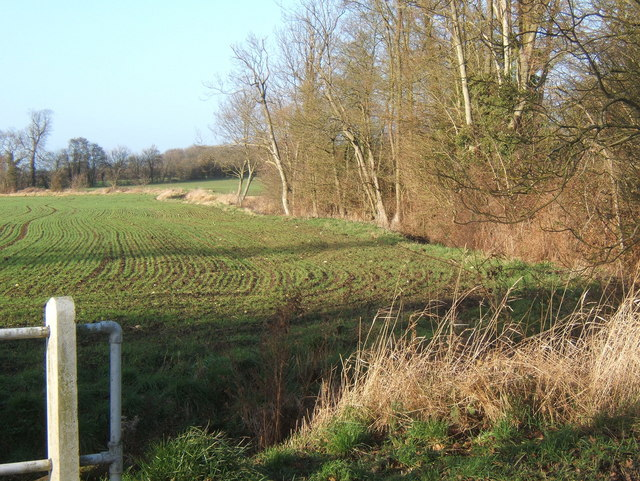 Field and line of trees north of Hightown Green