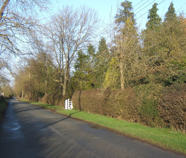 Lane at Hightown Green, hedgerows backed by trees
