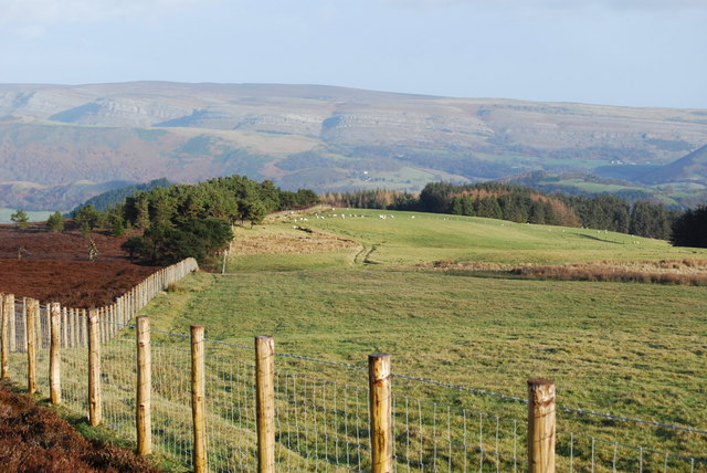 Grazings to the right, grouse moor to the left