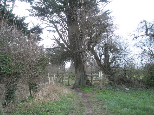 Tree by orchard at Southbourne