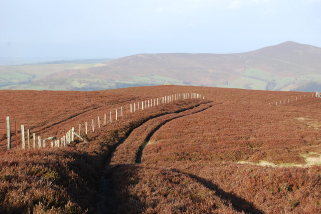 Boundary Fence on Berwyn Mountain