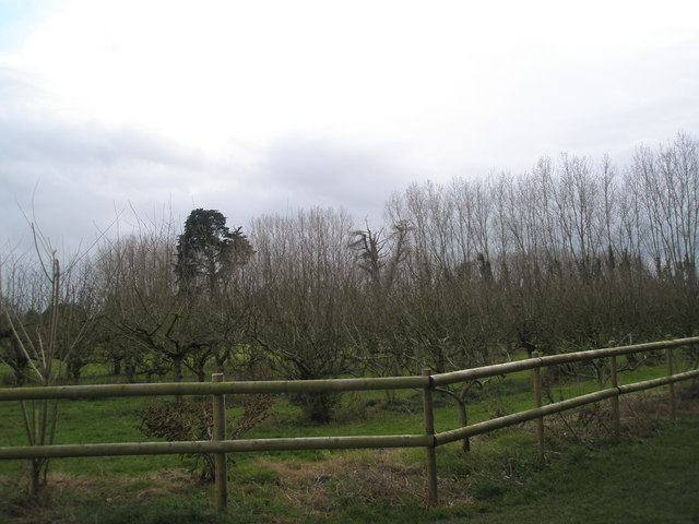Southbourne orchard