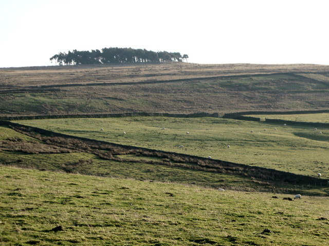 Pastures above Park Gates Farm