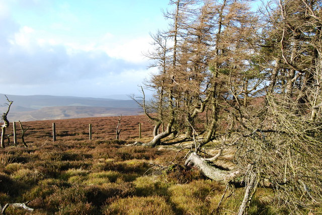 Well matured coppice on Vivod Mountain