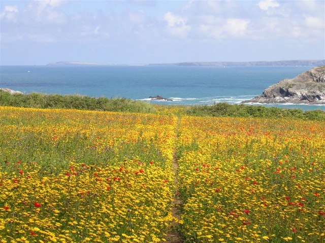Pentire Point West, looking to Pentire Point East