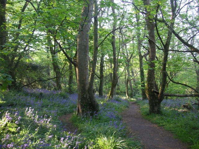 Bluebell woods, St Loy