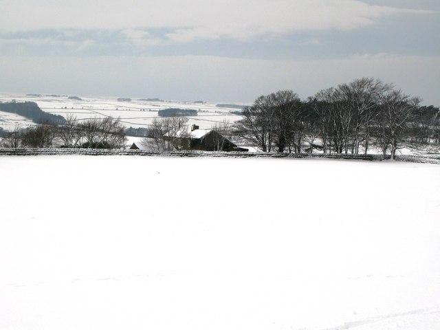 Pastures near High Scotch Hall (3)