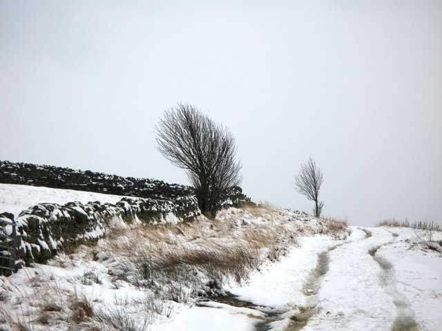 The track to Haggerstone Moss (3)