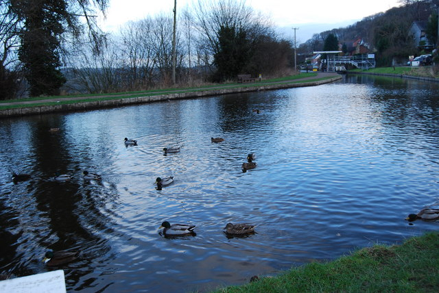 Ducks on the canal at a winter's evening