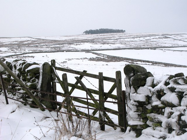 Pastures and moorland east of Park Gates Farm