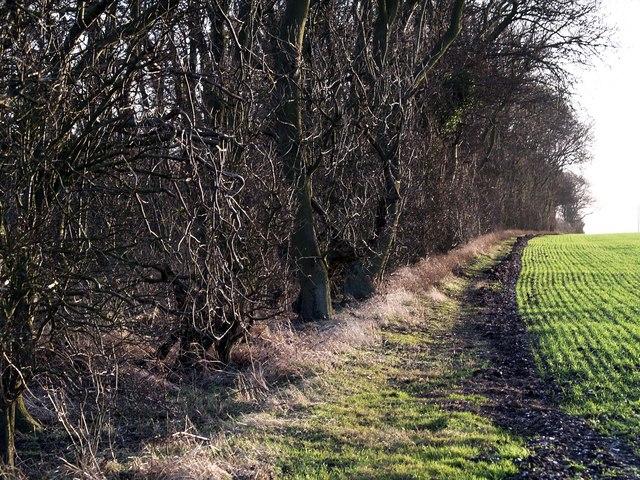 Littlefield Plantation in the low winter sun
