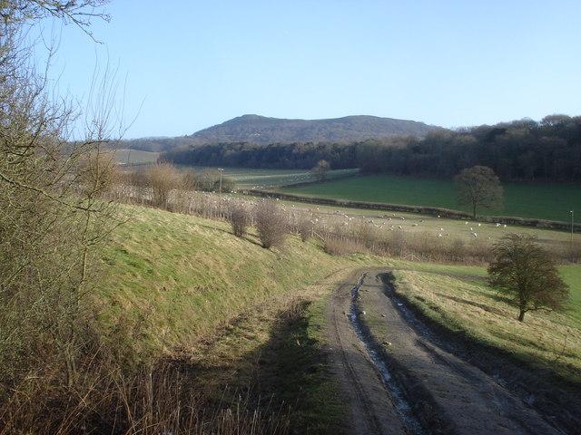 Farm track near Sitch Wood
