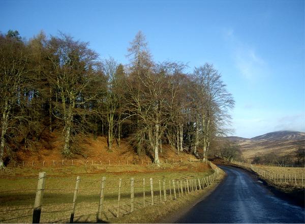 Roadside trees on approach to Glen Clova