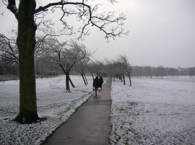 Cherry tree walk in snow