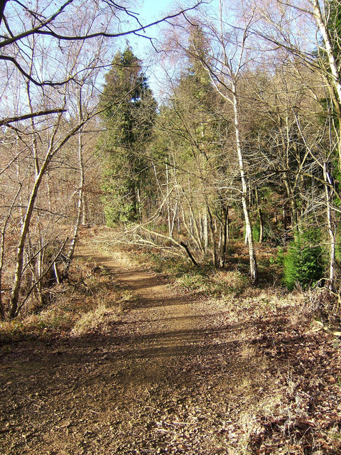 Wyre Forest footpath in Winter