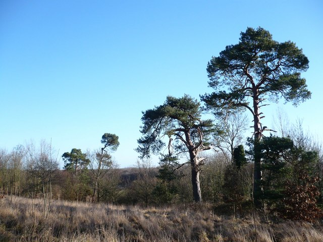 Lorenden Park, near Painters Forstal