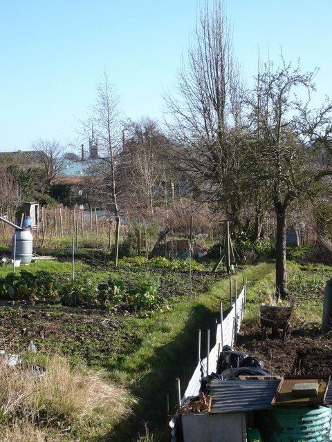 Stonebridge Allotments, with the church spire and brewery chimneys in the background
