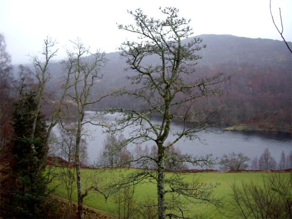 Lichen covered tree on shore of Loch Tummel