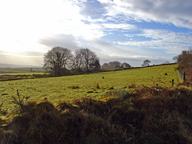 Meadow: Eithbed Farm
