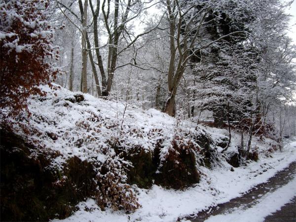 Wintry woodland near Kenmore