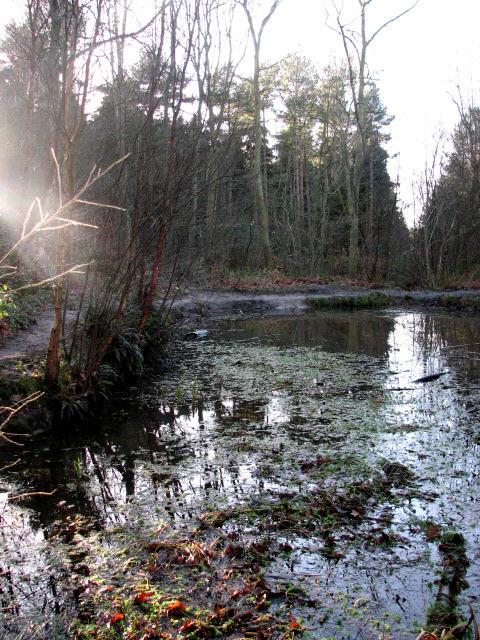 Muddy pond beside the path